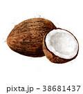 ココナツ 水彩画 白背景のイラスト 38681437