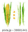 Corn on white background. Watercolor illustration 38681441