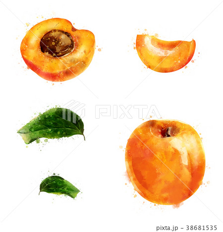 Apricot on white background. Watercolor 38681535