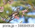 桜 野鳥 花の写真 38684910