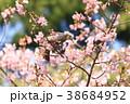 桜 野鳥 花の写真 38684952