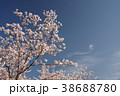 桜 青空 ソメイヨシノの写真 38688780
