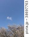 花 梅 白梅の写真 38697763