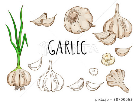 Garlic isolated on white background 38700663