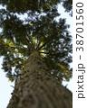 杉の木 38701560