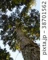 杉の木 38701562