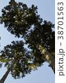 杉の木 38701563