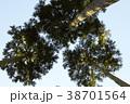 杉の木 38701564