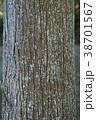 杉の木の幹 38701567
