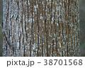 杉の木の幹 38701568