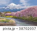 ふじ フジ 富士の写真 38702037