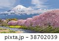 ふじ フジ 富士の写真 38702039