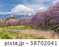 ふじ フジ 富士の写真 38702041