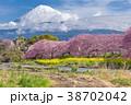 ふじ フジ 富士の写真 38702042