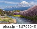 ふじ フジ 富士の写真 38702045