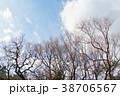 日本の冬、空と木(Sky and Trees in Japan) 38706567