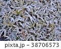 冬の景色 38706573