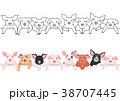 子豚のボーダーのセット 38707445