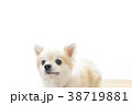 可愛い室内犬 38719881