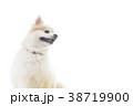 可愛い室内犬 38719900