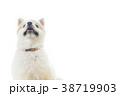 可愛い室内犬 38719903