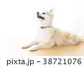 リラックスする犬 38721076
