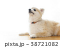 リラックスする犬 38721082