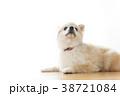 リラックスする犬 38721084