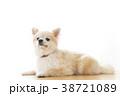 リラックスする犬 38721089