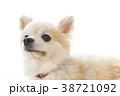 リラックスする犬 38721092