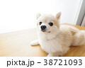 リラックスする犬 38721093