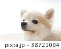 リラックスする犬 38721094