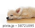 リラックスする犬 38721095