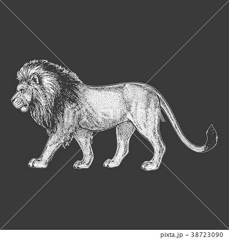 Zoo. African fauna. Lion, wild cat. Hand drawn 38723090