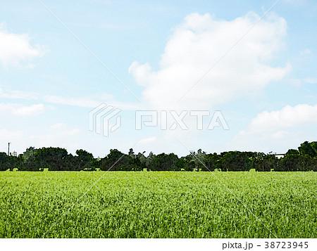 稻田 38723945
