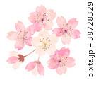桜 春 花のイラスト 38728329