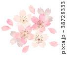 桜 春 花のイラスト 38728333