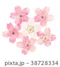 桜 春 花のイラスト 38728334