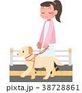 盲導犬と歩く女性 38728861
