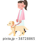 盲導犬と歩く女性 38728865