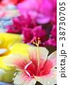 ハイビスカス 南国 夏の写真 38730705
