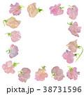 スイートピー 花 植物のイラスト 38731596
