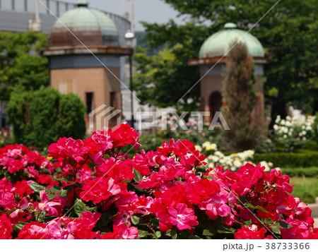 庭園に咲く紅い薔薇 38733366