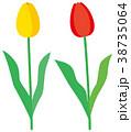 花 植物 チューリップのイラスト 38735064