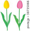 花 植物 チューリップのイラスト 38735066