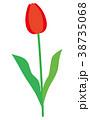花 植物 チューリップのイラスト 38735068