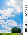 風景 空 木の写真 38735344