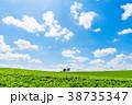 【北海道】真夏の美瑛 青い空と白い雲 38735347
