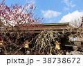 北野天満宮 梅 拝殿の写真 38738672