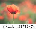 背景 きれい 綺麗の写真 38739474